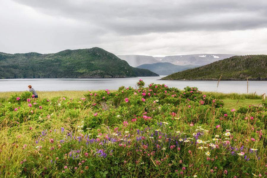 20150728_Newfoundland_0014